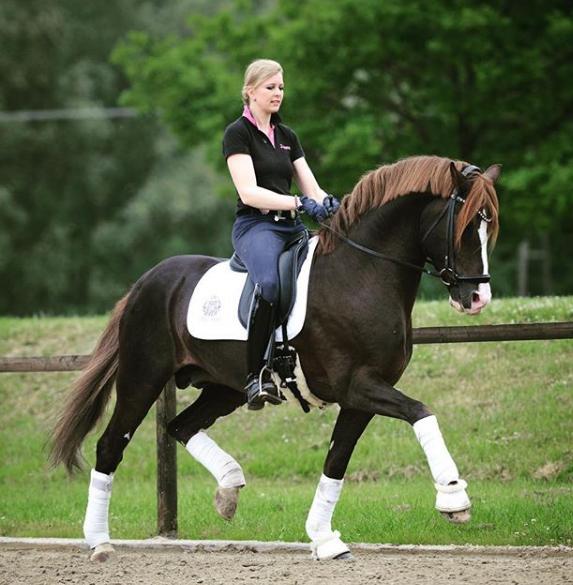 equestrian sports,horse sports