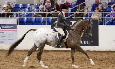 List of equestrian sports