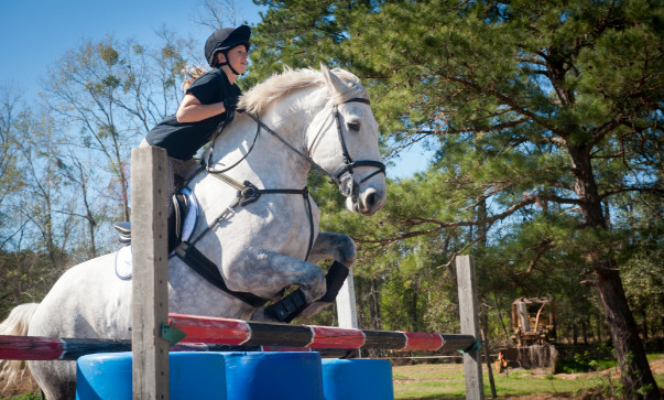 The different kinds of horse disciplines