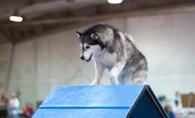Alaska dog sports