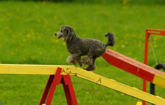 dog sports types