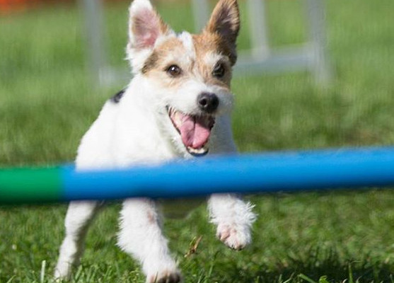 top dog sports for your dog